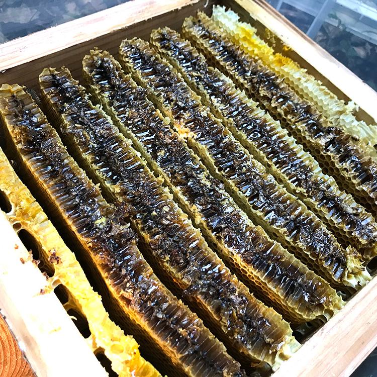 日本蜜蜂の蜜が溜まった様子